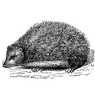 Hedgehog Article and Clip Art