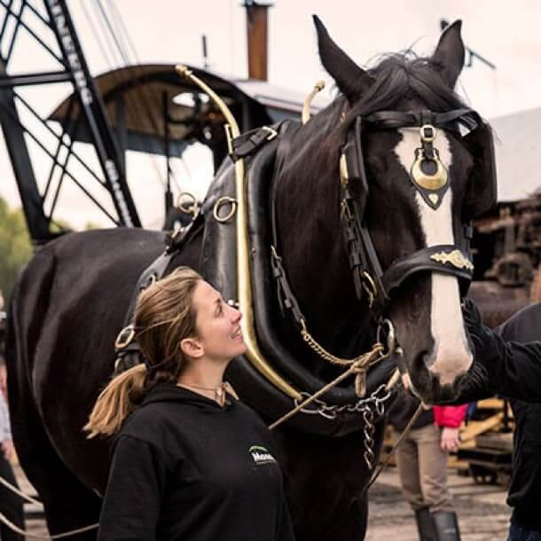 Shire horse experience days
