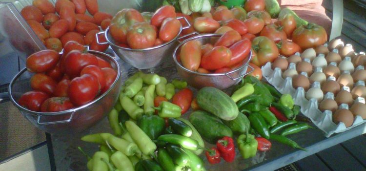5 Simple Tips To Growing A Healthy, Vibrant And ORGANIC Garden!