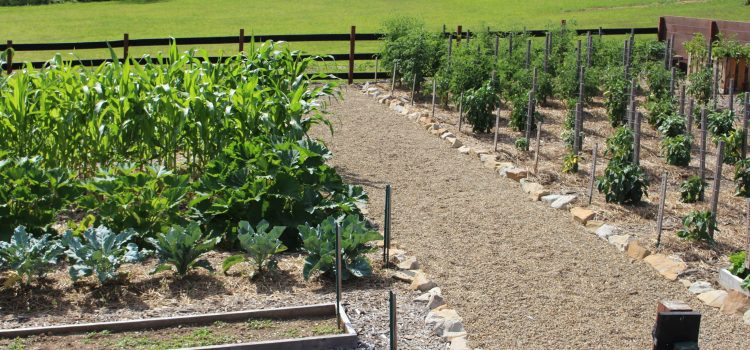 The One Must-Do Fall Chore For Your Garden – Plant A Cover Crop!