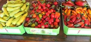 Hot Pepper Crop