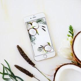 Fresh Fruit Phone Wallpaper