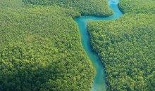 Μάθε ένα από τα καλύτερα κρυμμένα μυστικά του Αμαζονίου