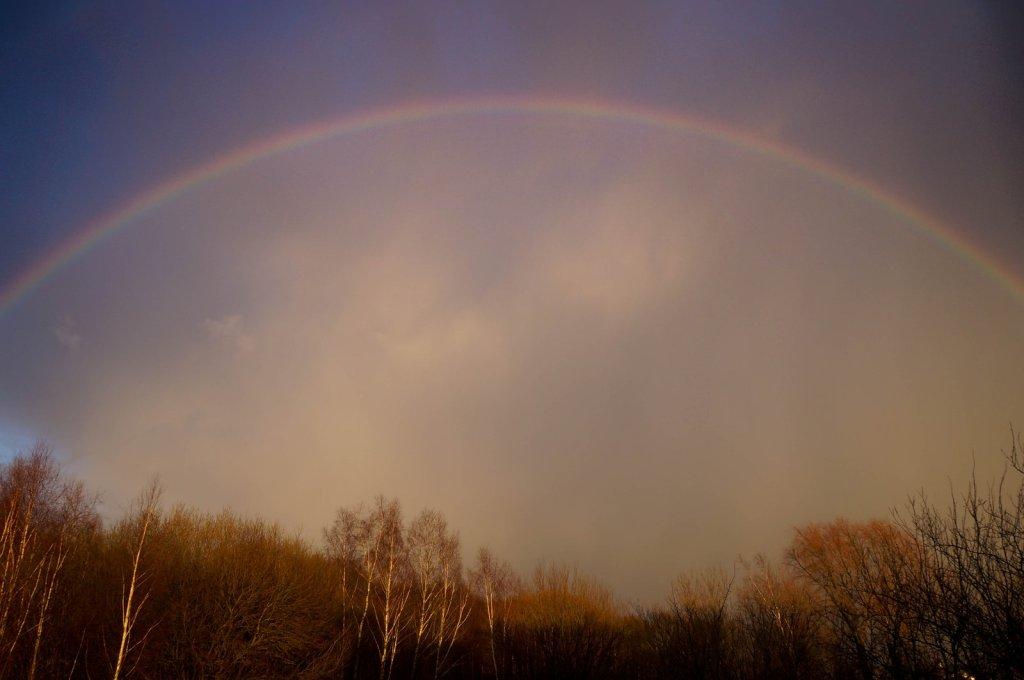 rainbow_by_sunny_world-d8jcwsg