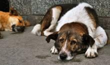 Πάτρα: Το σκουπιδιάρικο πήρε μαζί του και ένα ζωντανό σκύλο