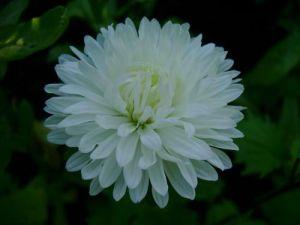 Цветок - звезда