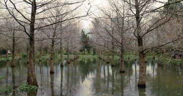 《旅遊* 花蓮壽豐 》鈺展苗圃|近東華大學,詩意十足的落羽松秘境