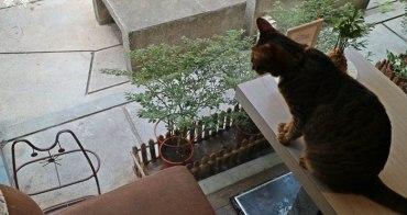 《台北貓咪咖啡》貓極簡。師大夜市內的老牌貓咪咖啡廳
