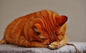 cat-1675428_1280