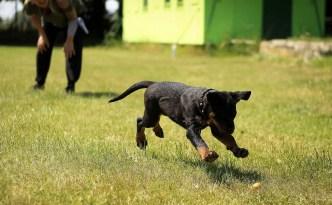 puppy-1517466_1280