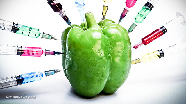 GMO-Bell-Pepper-Injections