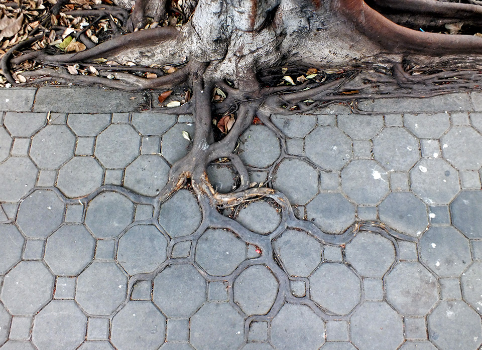 adaptive roots in concrete jungle