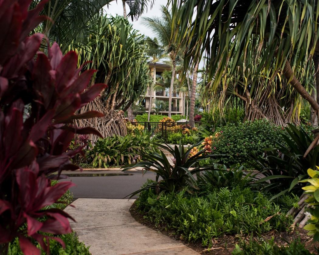 hawaii161205_344