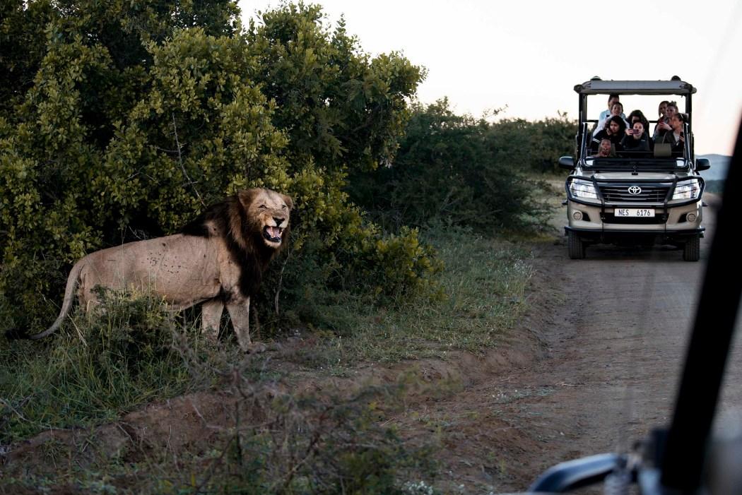 safari_170322_10