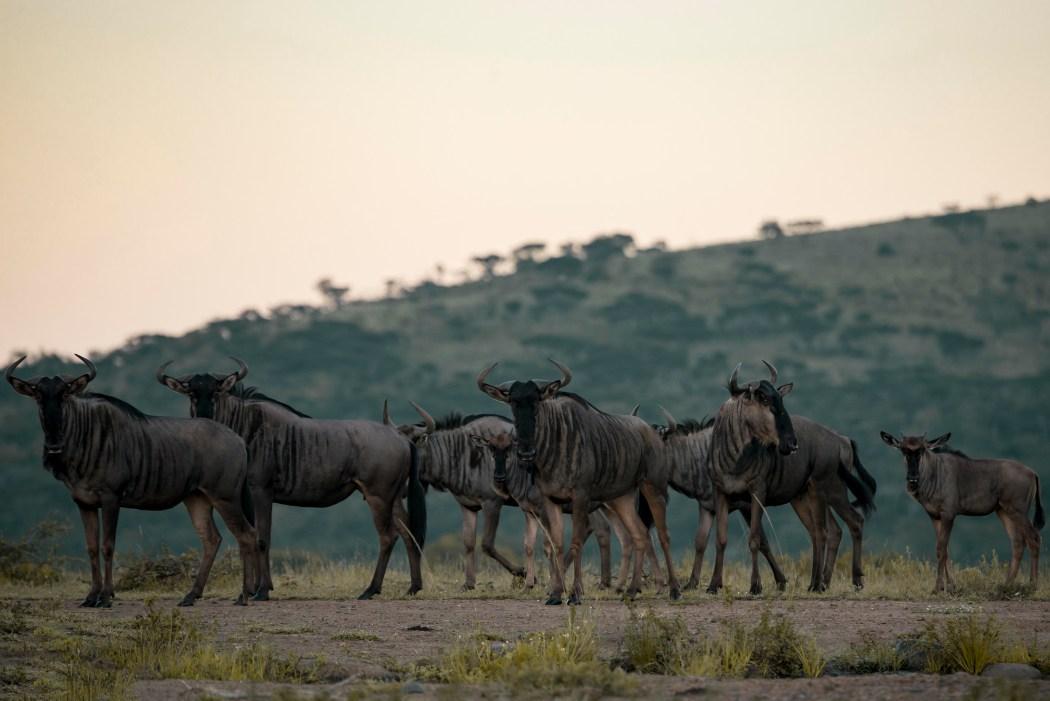 safari_170322_12