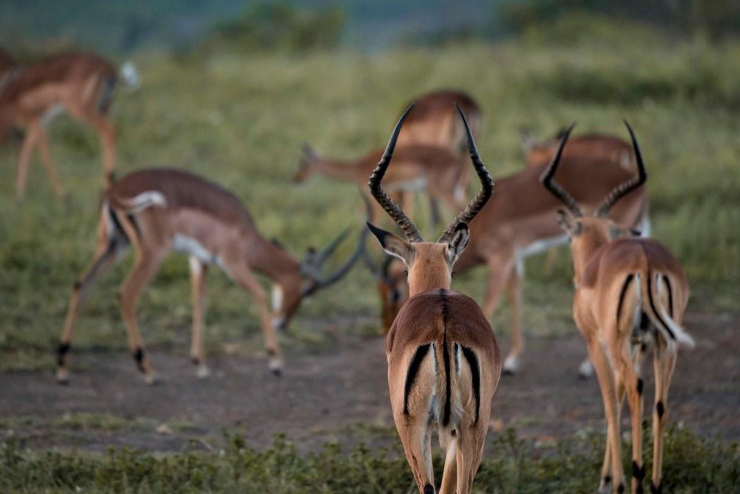 safari_170322_150