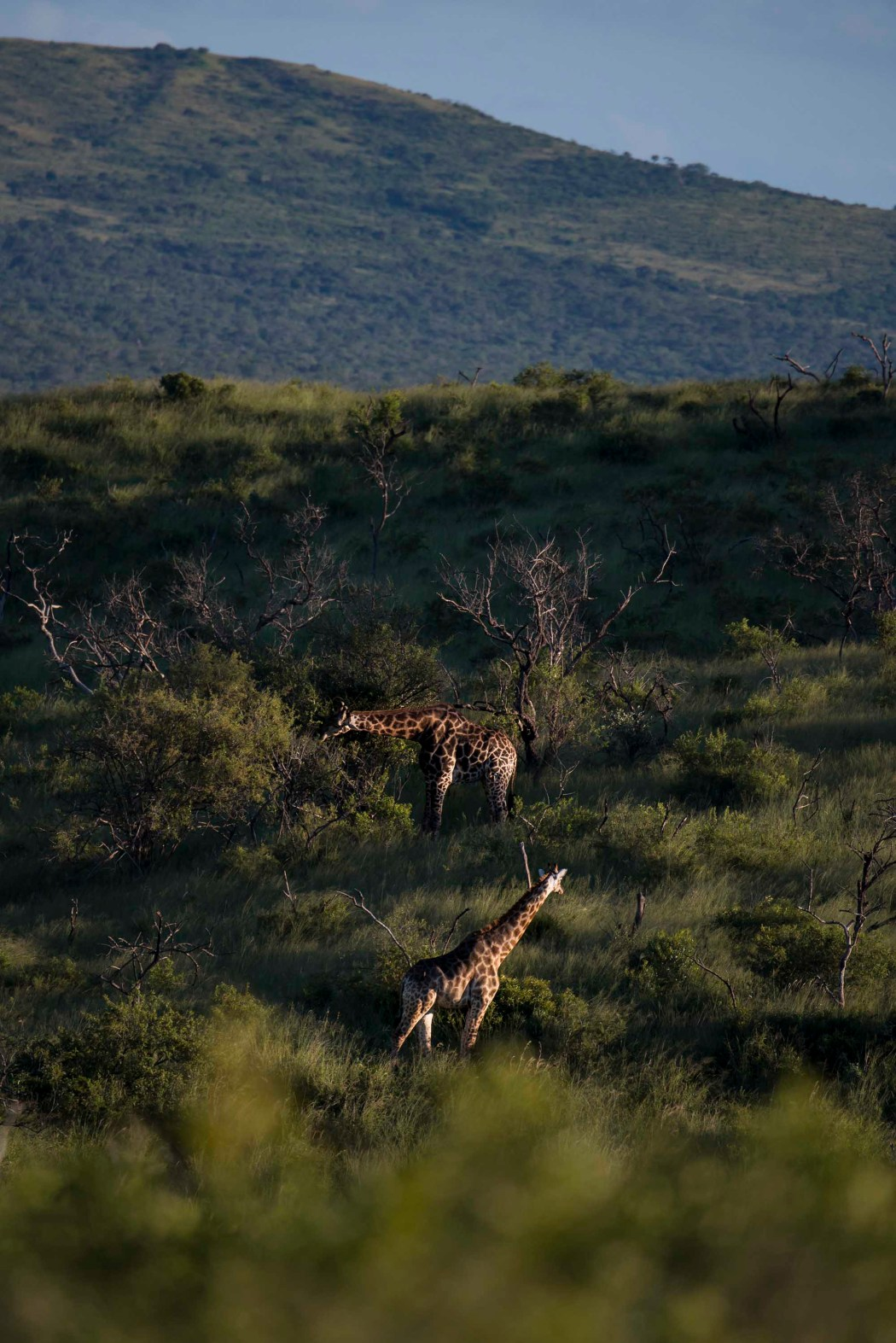 safari_170322_3