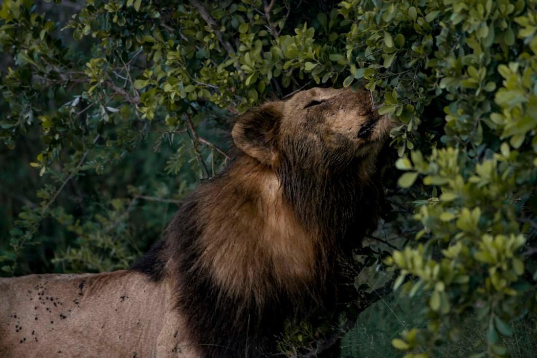 safari_170322_9