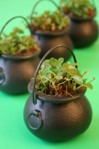 lucky clover pots