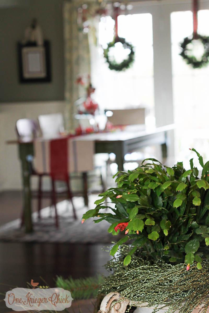 Christmas Cactus - OneKriegerChick.com