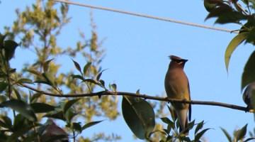 How to start bird watching with kids