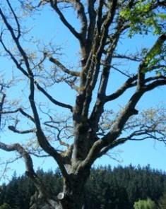 Amber Sutton Broken Branches_2