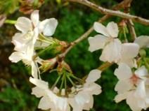 Caitlin Forgie Earths new bloom_2