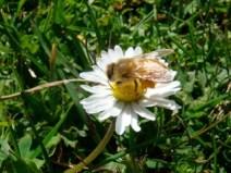 Emma Thomson Bee at work_2