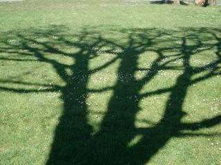 Joe Lunn shellow shadow_2