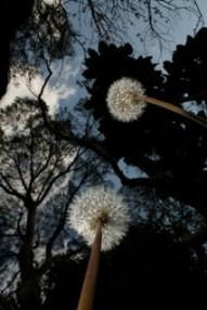 Sophie Burns Fairy Plant IMG_3794_2