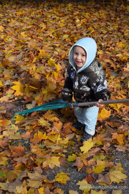 Talon kind of, sort of helps rake leaves.