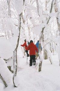 ↑イクサンダー大沼カヌーハウスによるスノーシューツアー。※画像はイメージです。