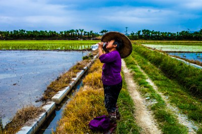 A rice bearer in Kaiping takes a drink