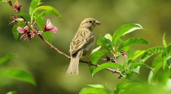 Bird Linux