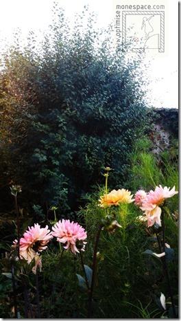 Comment agrandir un jardin : plante feuillage bleu