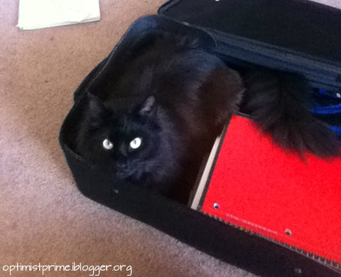 zorro-cat-luggage