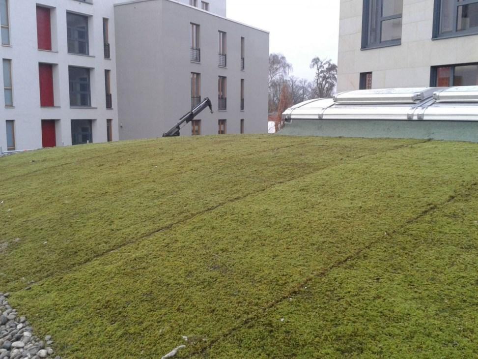 Sedum Roof Green Roofs Are For Sedums