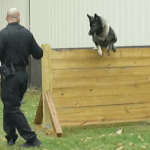 Video: Orange Police Dept. K9 Agility Course