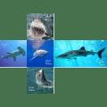 V-CUBE 2 Pillowed - Sharks Print