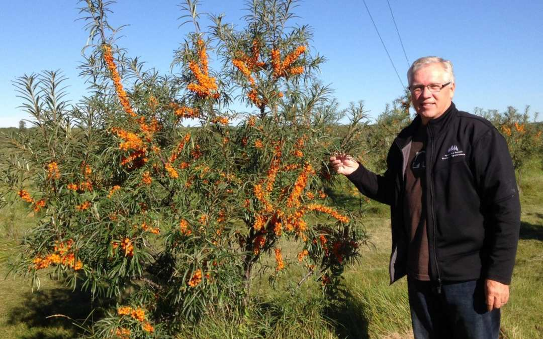Episode 10: How to Grow Seabuckthorn and The Temperate Orchard Conservancy
