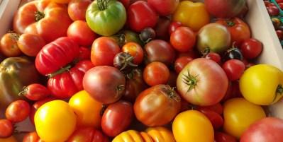 Tomato Tasting!!