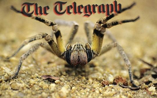 telegraph spider