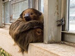 sloth photo