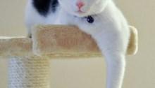 6837300105_8bbf5fce31_b_smug-cat