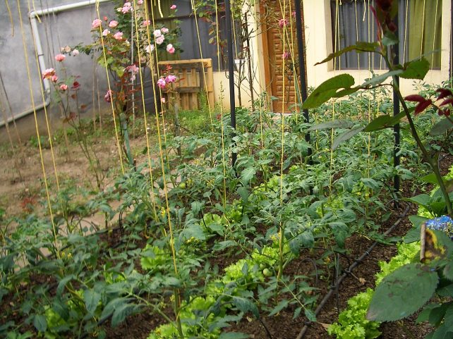 grow organic vegetables in 30 days
