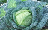 green-cabbage-212049_960_720