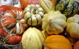 How to grow Organic winter squash