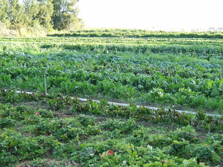 Organic vegetable farm