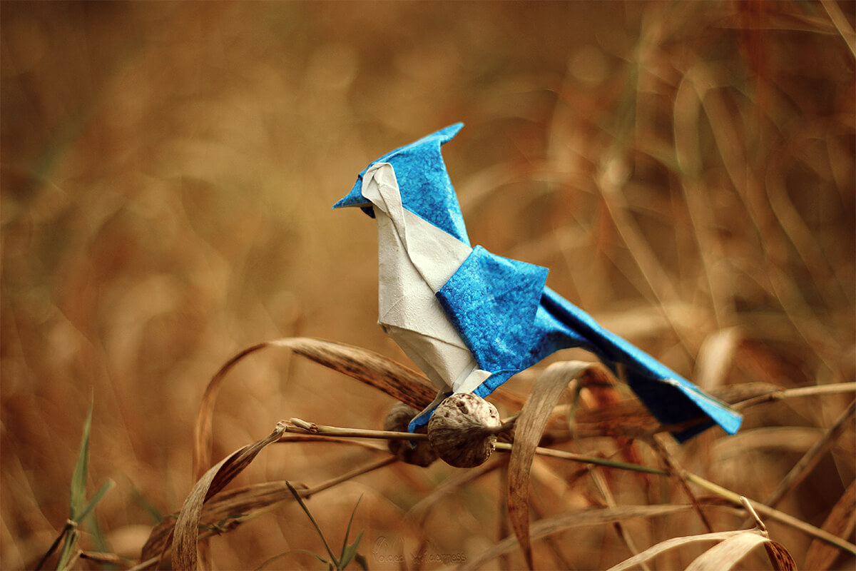 Origami Bluejay