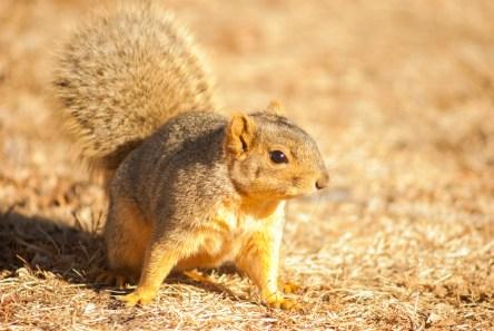 Very friendly squirrel